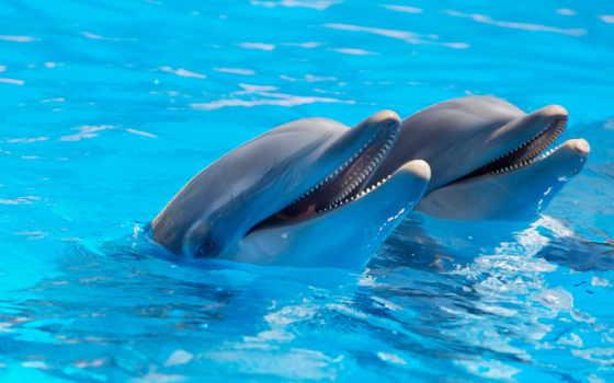 дельфины, zhivotnye, water, природа,