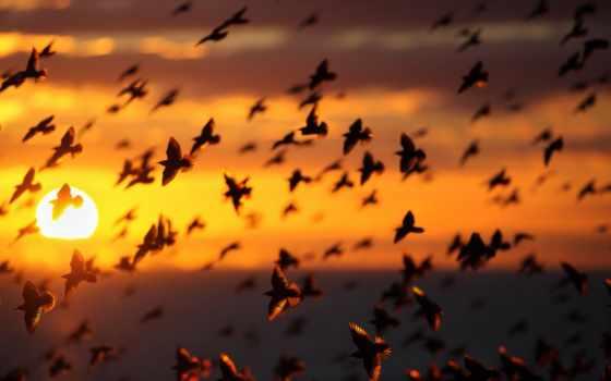 птиц, alan, vesti, mackenzie, тысячи, животные, птицы, янв, со, автотрассой, сети,