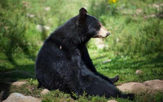 медведь, лет, world, человека, обнаружили, губим, руками, катастрофам, своими, приводит,
