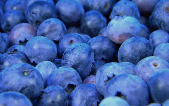 плод, черника, free, еда, blueberries, images, фото, organic, pixabay, art,