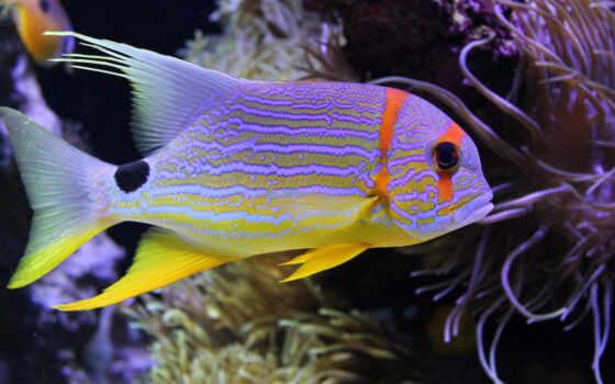 fish, миро, красивый, underwater, биг, море, картинка, заставка