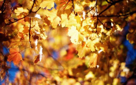 жёлтые листья,