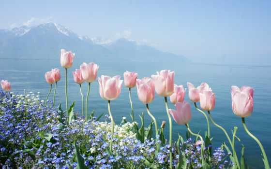цветы, природа, mountain