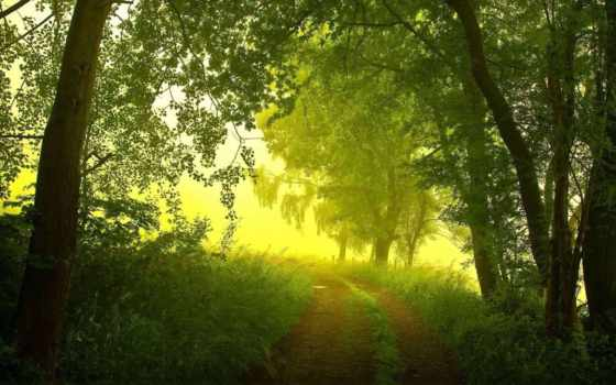 природа, summer Фон № 139287 разрешение 1920x1080