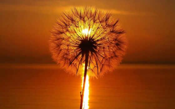 оранжевого, картинка, оранжевые, макро, место, sun, проживания, before, листва,