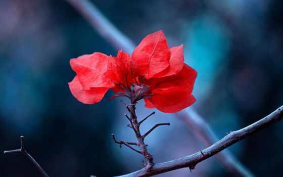 листва, макро, красные, branch, природа, уже, дерева, картинка,