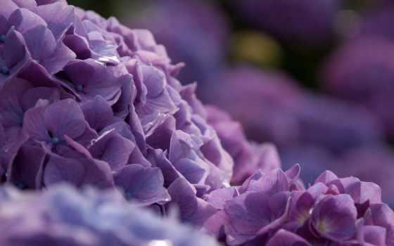 куст, цветы