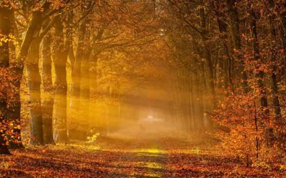 осень, деревья Фон № 33617 разрешение 1920x1200