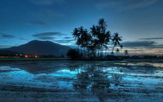 вечер, пальмы, гора
