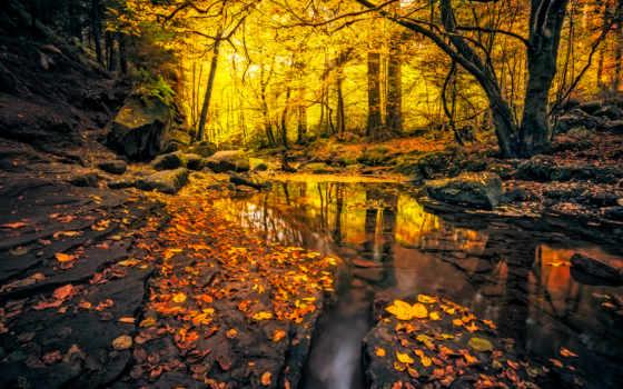осень, ecran, fonds, лес, ручей, листва, природа, german, камни,