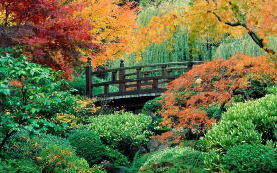 garden, japanese, мост, gardens, сады, японские, flowers, вектор,