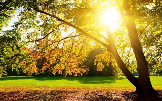 осень, sun, золотая, уже, страница, загружено, коллекция,