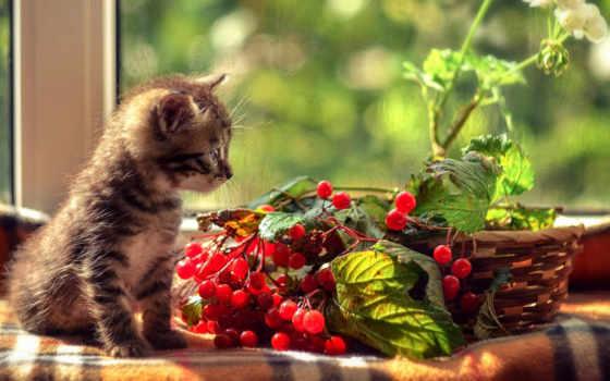 кот, kitty, картинка, котенок, смотреть,