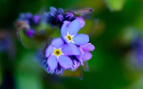 цветы, purple, забыть