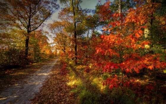 осень, природа Фон № 33574 разрешение 2560x1600