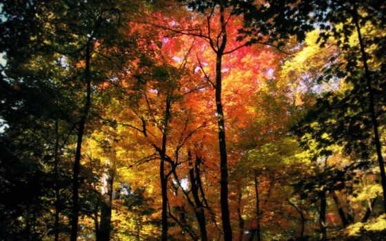 осень, поздняя, золотая, красивые, осенью, широкоформатные,