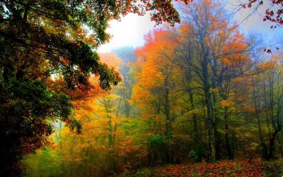 лес, abyss, природа, id, science, журнала, pin, home,