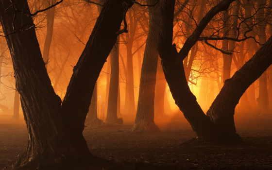 оранжевый, lifestyle, color, mixture, часть, images, свет, мб, количество,