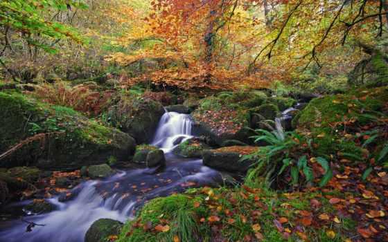 природа, лес, осень, ручей, листва, водопад, река, камни, falls, online, флейта,