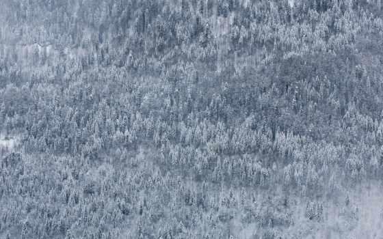 дмитрий, chistoprudov, winter, природа, landscape, edge, лес, images,