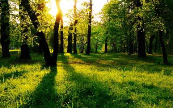 лес, обоев