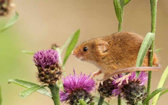 мышь, малютка,