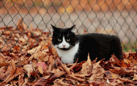 кот в листьях