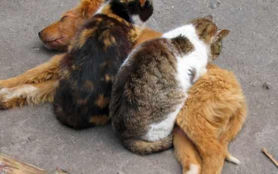 животные, кошки, собаки