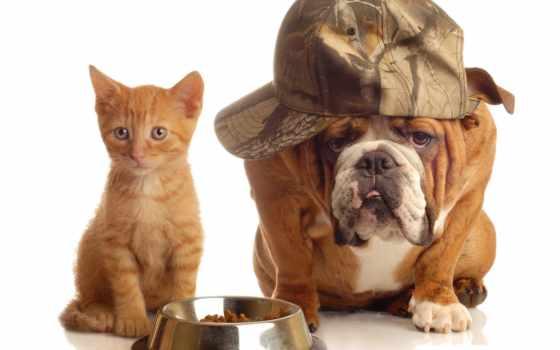 собак, собака, кот