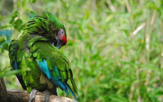 попугай, you, resolution