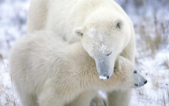 медведь, winter, дек