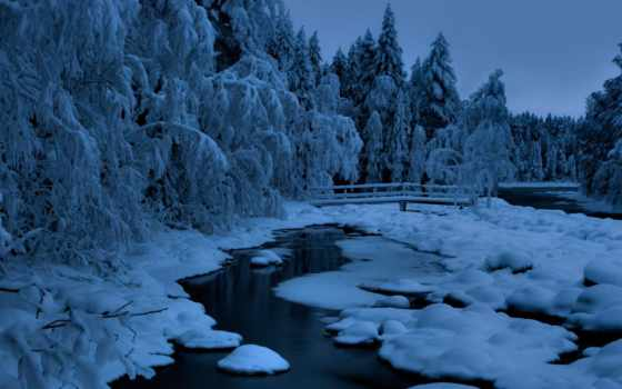 сумерки, лес, winter