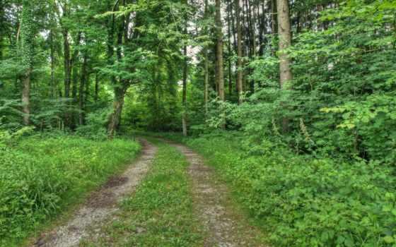 природа, страница, фон, дорога, trees, cover, листва, дома,