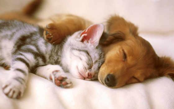 месте, человека, animal, животных, одно, спит, глубоко, новом, передержка,