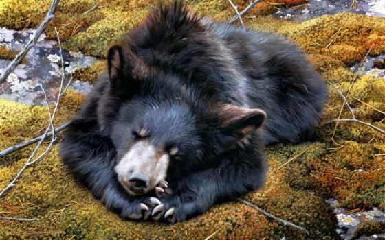 медведь, carl, brenders,