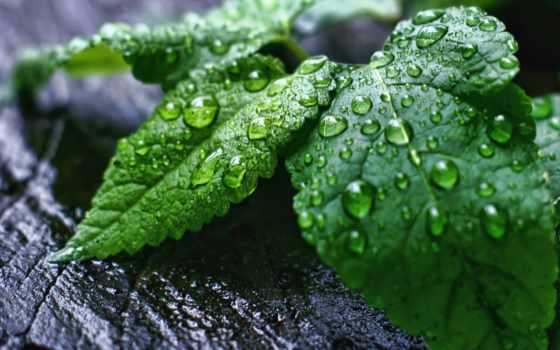 капли, росы, waters, макро, каплями, cvety, роса,