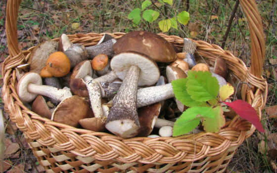 champignon, корзина, mushroom, hongo, zdjęcia, fond, strona, posiadamy, tapety