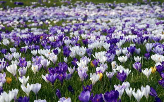 марта, photos, весна