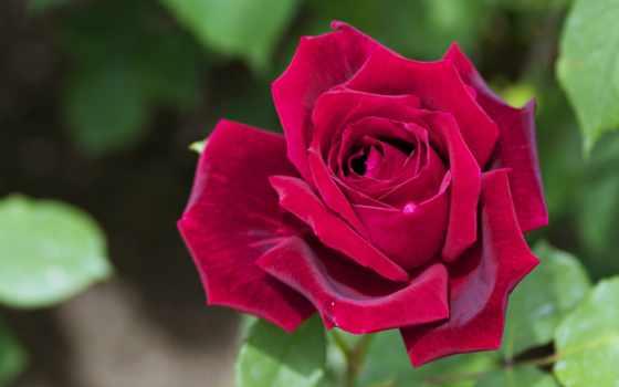 para, perfil, facebook, imagenes, bonitas, imágenes, flores, lindas, imagens,