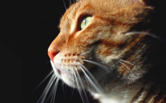 animal, кот, animals, смотреть, картинка, desktop, gato,