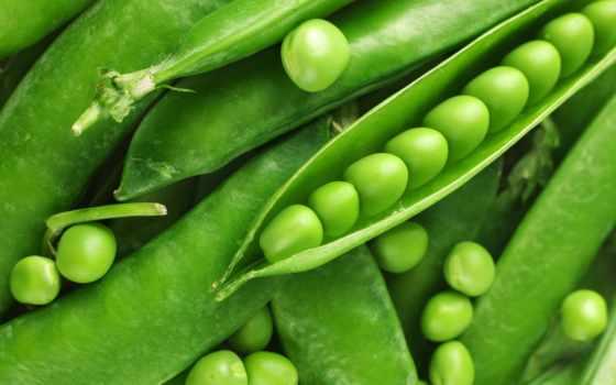 plants, растение, peas, free, desktop, are,