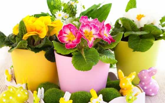 cvety, горшке, горшках, цветы, растения, комнатные, страсть, name, названия, цветов,