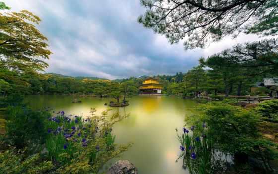 kyoto, japanese, япония, храм, trees, золотистый,