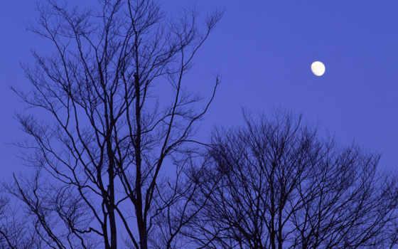 japan, night