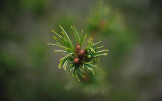 растения, ветка, зелень
