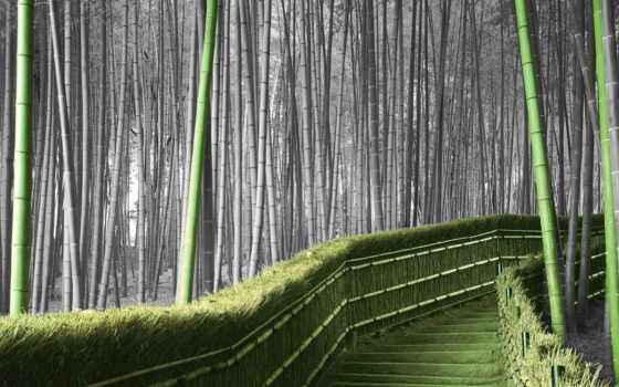 бамбук, les, бамбуковая