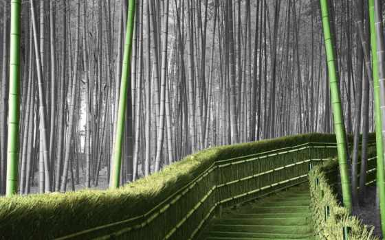 бамбук, les, бамбуковая, роща, ni, дорога,