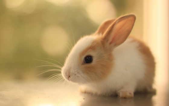 cute, animals, animal Фон № 86881 разрешение 2560x1600