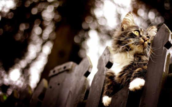 mein, кот, котенок, котенка, котята,