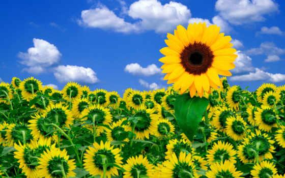 hoa, hương, hành